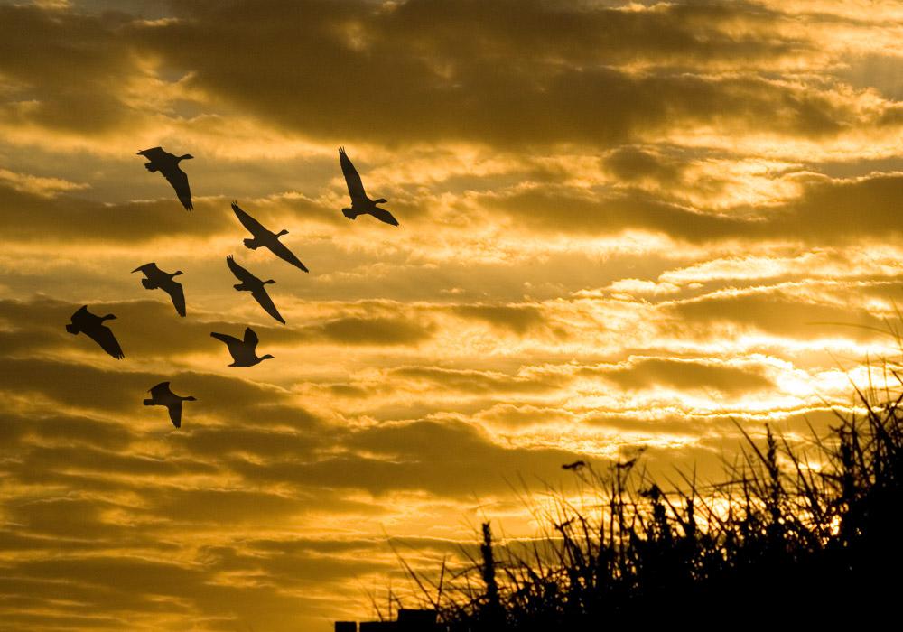 photoblog image Migration