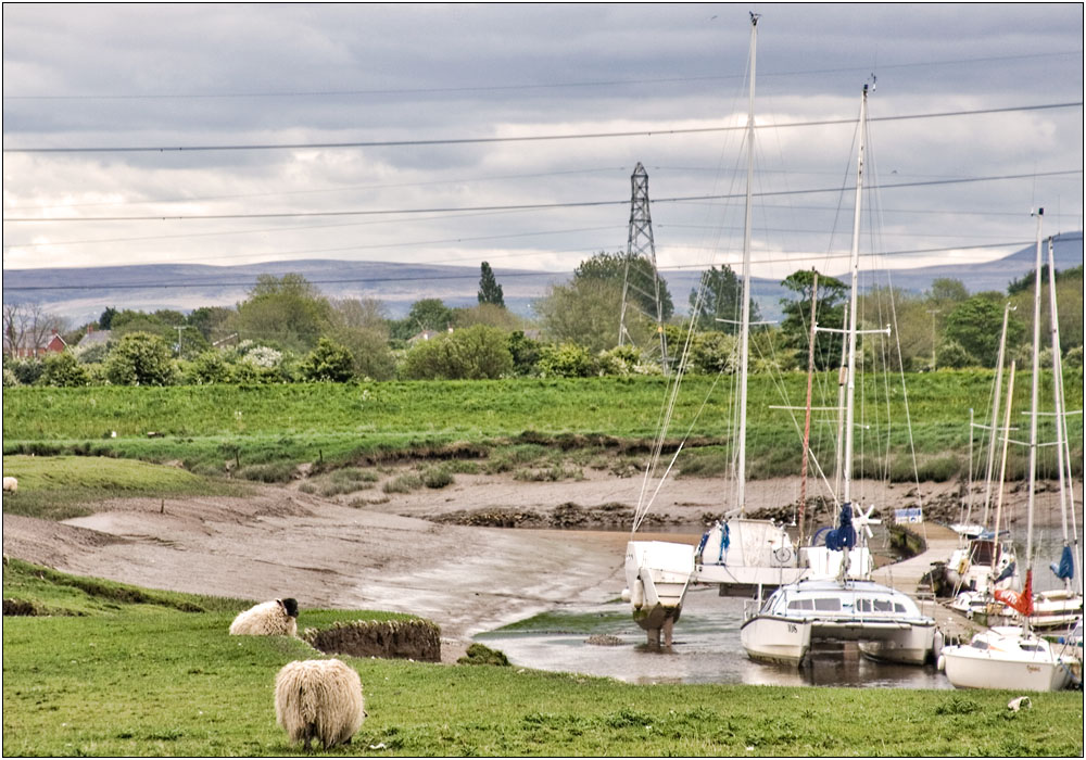 photoblog image Boats with Sheep