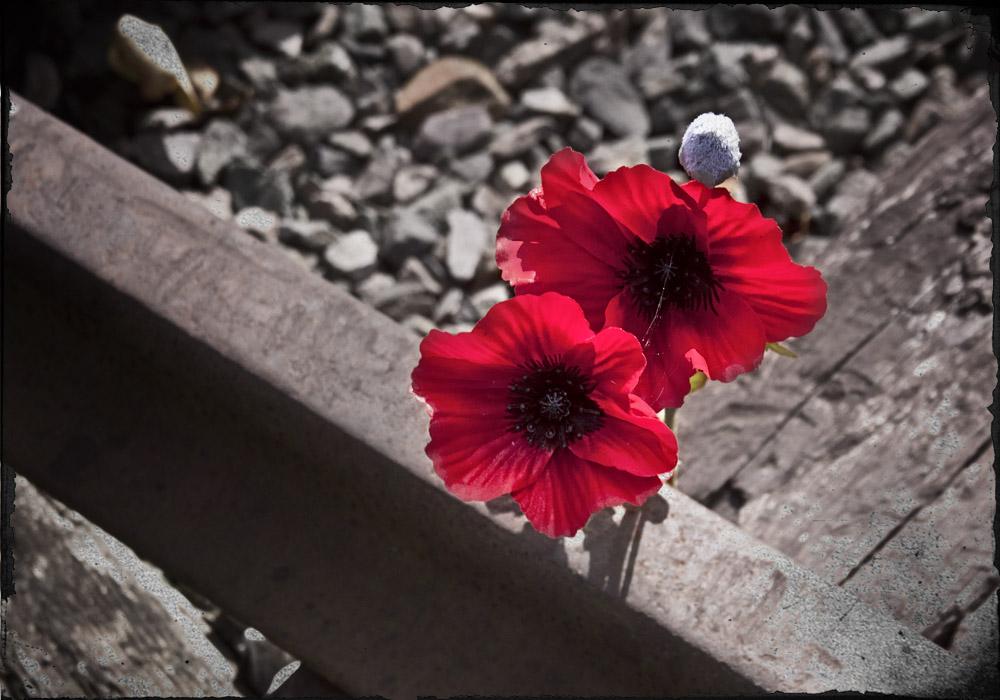 photoblog image Railways at War